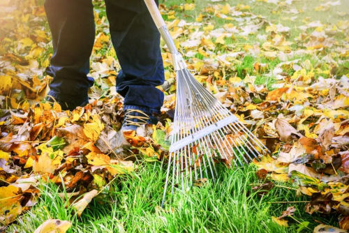 Raccolta foglie autunnale